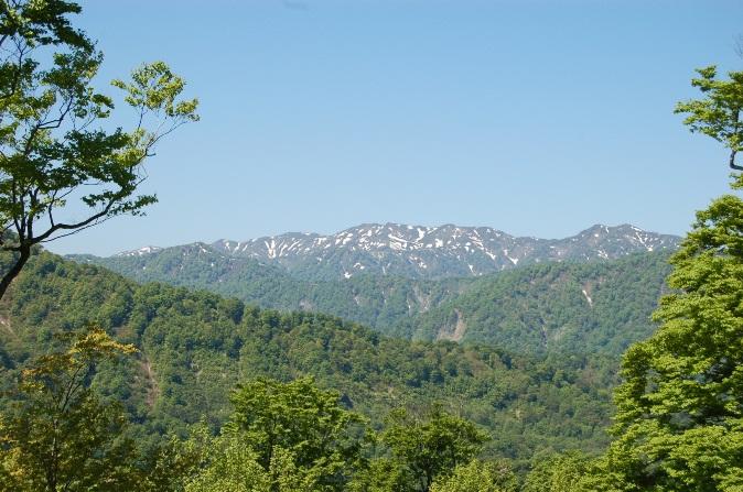 白神山地の画像 p1_11